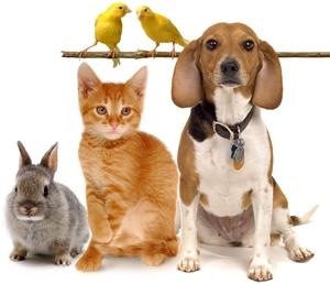 Dierenverzekeringen vegelijken