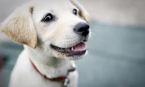 puppyconsult