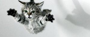 Kattenverzekeringen vergelijken