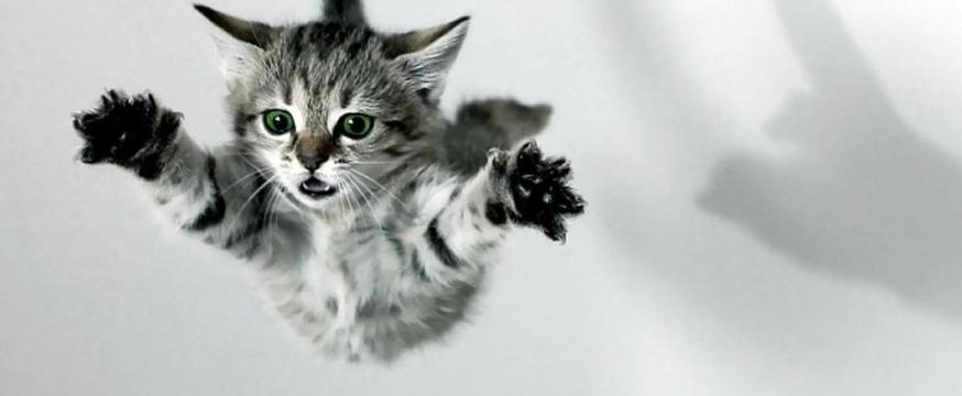 gevallen kat verzekeren