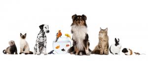 goedkope dierenverzekering